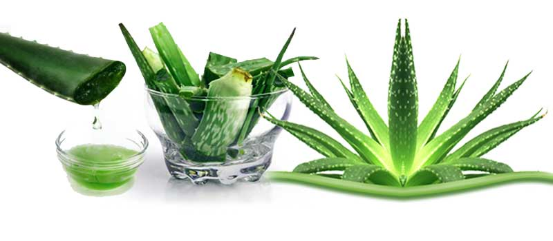 Aloe Vera Gel And Hair Treatment  Natures Dairy