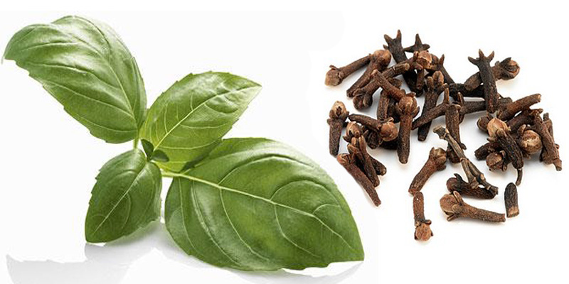 basil and clove oil-pain relief