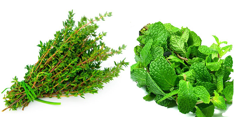 thyme-&-peppermint